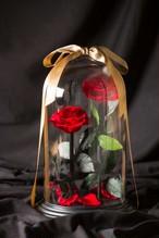 【特別なプレゼントや開店祝いに】DESTINY ROSE(デスティニーローズ)(2本立ち)