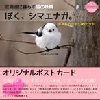 《癒やしの小鳥》シマエナガのオリジナルポストカード(12枚セット)【2,000円以上のご注文で送料無料】
