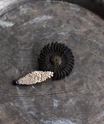 黒のマーガレットのブローチ(HOR013)