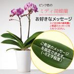ご希望のメッセージ - ミディ胡蝶蘭2本立.ピンク色