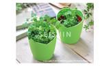 自分で育てる幸せ!!四つ葉のクローバー栽培セット