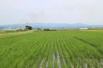 平成29年度 青森県産あきたこまち(無農薬・無化学肥料)玄米20キロ