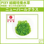 PIXY組織培養水草 ニューパールグラス