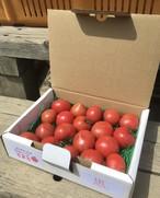 送料無料!フルーツトマト少量お試し箱☆ご家庭用不揃い☆小粒~中 高糖度トマト お試しサイズ