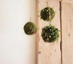 豆蔦 吊り苔玉キット (※ youtubeを見て自分で作る用)