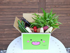 とれたて新鮮!野菜BOX(送料無料)オリジナル!とっちー段ボールに入れてお届け!