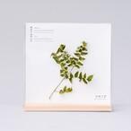 1123_サンショウの枝