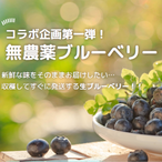数量限定!!岩手県産★無農薬生ブルーベリー1.2㎏ 2020年7月限定出荷分を予約開始!