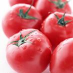 Tomato トマトのジャム
