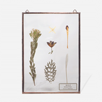 Botanical Frame L013(A_Gold)