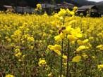 自家農園採取 非加熱・生はちみつ「ハチだけの仕事」100g  〜 le fleuveのお菓子に使っている蜂蜜です 〜