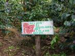 ニカラグア・サンホセ農園 ジャバニカ ウォッシュド 中深煎り 200g