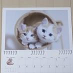壁掛けカレンダーレフィル 子猫A(ルナ・ミュウ・モコ)6種類セット