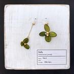 【終了】紫陽花(緑)のイヤリング/ピアス