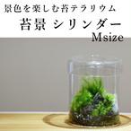 【苔テラリウム】苔景シリンダー Msize