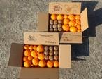 たっぷり7デコポン他★きらきら柑橘11種類位★インフルなんてぶっ飛ばせ!★華やか柑橘