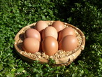 ほんまの卵 M・Lサイズ混合 2パック(20個)