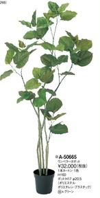 ウンベラータ   花言葉「愛」「永久の幸せ」 高さ:160cm