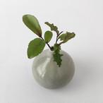 グレーのフラワーベース|Gray Flower Vase