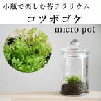 小さな苔の森 コツボゴケ micro pot ◆水をかけるとキラキラ【苔テラリウム】