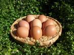 ほんまの卵 M・Lサイズ混合 6パック(60個)