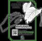 [100g] Ignacio Gutierreze, El Salvador - Natural / イグナシオ グティエレズ、エルサルヴァドー - ナチュラル