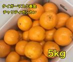 チャリティぽんかん                         5kg(約35個入)