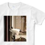 必死すぎるネコ Tシャツ C