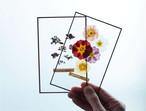 Two glass specimen & Sweets assort (ガラス標本と喫茶青政お菓子のセットボックス)