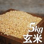天日で干したコシヒカリ5kg 2018年新米(玄米)