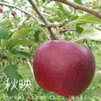 【自家用3kg】人と自然がよろこぶ「感じるリンゴ」(9月下旬〜12月上旬)