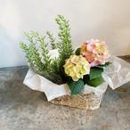 全国送料無料!MothersDayミニ紫陽花とハーブの寄せ鉢セット