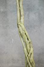 シェフレラ・カポック【観葉植物】
