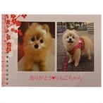 愛犬りんごちゃんの小さな写真集※在庫現品限り※