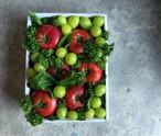 フルーツトマトギフト 白化粧箱