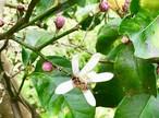 【受講者さま限定】日本ミツバチ巣箱オーナー権