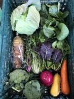 次回、週末発送『冬色』お任せ野菜セットM80サイズ