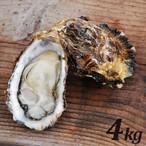 配送日指定3月末まで【朝どれ直送】殻付養殖真牡蠣 4kg 加熱用