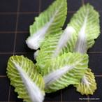 白菜と春菊の型