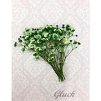 コンパクト押し花 カスミソウ(グリーン) 少量をパックにしてお届け! 押し花素材