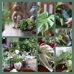 毎月お届け。観葉植物の頒布会「植物のある生活、インドアグリーンスタイル」