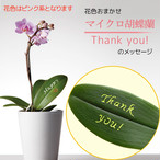 Thank you! - マイクロ胡蝶蘭1本立