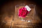 【花の誕生日プレゼント】プリザーブドフラワー/Jewel Ring-誕生日カラー-10月