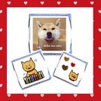【限定】 柴犬ラク チロルチョコ3つセット