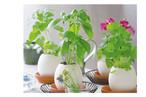 卵型お花栽培キット エッグリング花