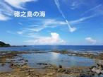 【西川さま専用】高倉みそ1kg