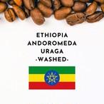 ETHIOPIA ANDROMEDA URAGA -Washed- (エチオピア アンドロメダ・ウラガ -ウォッシュド精製-)100g