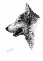 瀬戸優 ドローイング-オオカミ-