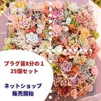 人気商品1位★送料込み【第4種便】小プラグ1/8枚セット(25個入)