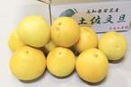 【ご家庭用】土佐文旦 5kg 2L~4L (8~11玉) 送料込